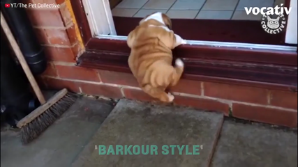 Dogs Are Doing Parkour, And They're Killing It