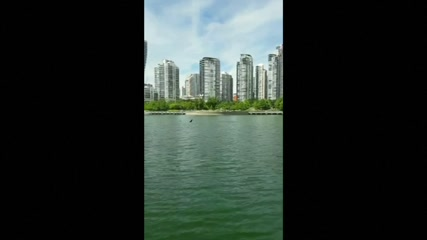 Orcas spotted in Vancouver's False Creek