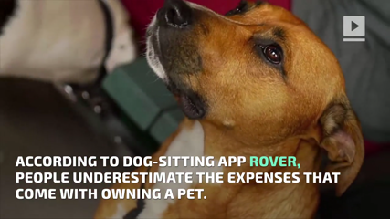 The Cost of Owning a Dog Is More Than You Think
