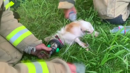 House fire dogs revived by special care of fire crew