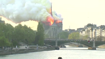 'This trunk is exceptional' Forestry officials seek trees to rebuild Notre Dame