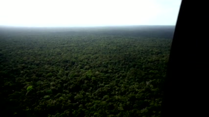 NGO says two-thirds of world's rainforests destroyed or degraded