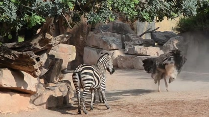 Valencia zoo park gets first newborn zebra this year