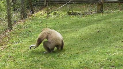 Zoo animals having fun in the sun as mini heatwave hits UK
