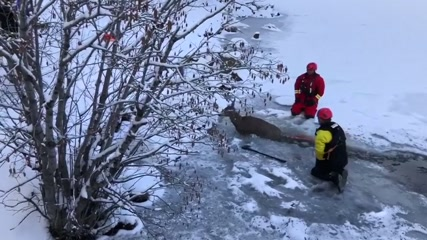 Firefighters pull deer out of icy lake in US