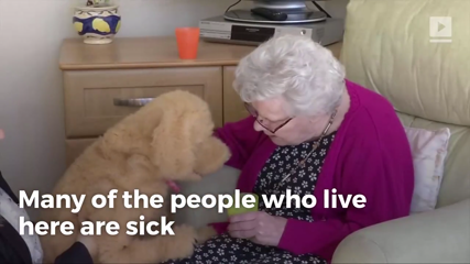 This Adorable Robotic Dog Cares for the Elderly