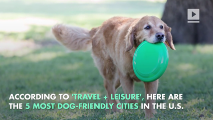 The Top 5 Most Dog-Friendly Cities in the US